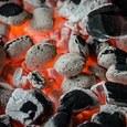 Первые 95 вагонов угля ушли из ДНР в Россию