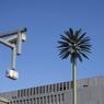 Заменители газа и нефти: электричество растет на дереве (ФОТО)