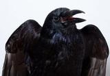 Ученые впервые обнаружили сознательные процессы в головном мозге птиц