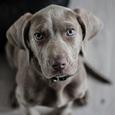 Исследователи обнаружили у собак новую уникальную способность
