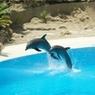 Ученые выяснили, как спят дельфины