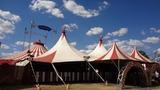 На Кубани вынесли приговор директору цирка после нападения львицы на ребёнка