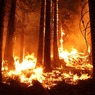 Бушующий в Калифорнии пожар стал крупнейшим в истории штата