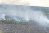 Полиция установила ещё одного причастного к пожару в зоне Чернобыльской АЭС