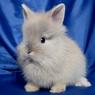 Датский радиоведущий убил крольчонка в прямом эфире