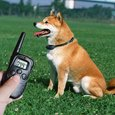 Ученые создали гаджет для дистанционного общения с собакой