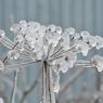Синоптики прогнозируют ледяные дожди на юге Подмосковья