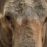 Когда Слон был Элефантом, его рот размером был равен носу (ФОТО)