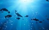 Ученый спрогнозировал массовое вымирание жителей Земли по старому сценарию