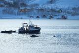 В Охотском море браконьеры распускали паруса