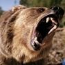 Медведь покусал туристку в Благовещенске