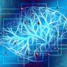 В мозге умных людей оказалось меньше нейронных связей