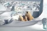 В Арктике в несколько раз ускорились темпы потепления