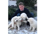 Глава Сахалина раздаёт щенков в обмен на секрет семейного счастья