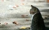 Во Владивостоке автомобилистка протаранила 11 авто, чтобы не наехать на кошку