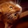 Театр кошек Куклачева готов приютить кота-гурмана из Владивостока