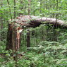 В понедельник штормовой ветер повалил десяток деревьев в разных районах Москвы