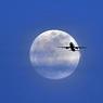 «Трансаэро» открывает рейсы из Москвы в Тбилиси