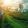 Австрия разрешила проезд поездов из Италии после проверки на коронавирус