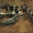 Палеонтологи нашли останки крысоподобного существа - древнейшего предка человека