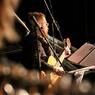Ученые доказали, что классическая музыка нормализует артериальное давление