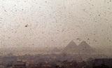 Казни египетские: власти Египта приготовились к нашествию саранчи