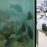 Китайский супермаркет изобрел и показал свою фишку - воскресающую рыбу