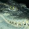 Кинологи хотят повышения штрафов плохим собачникам, а в Подмосковье погиб крокодил