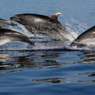Ученые: дельфины осознанно выбирают друзей