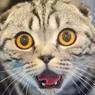 Карельские коммунальщики назвали виновника блэкаута в Сортавале – кота-хулигана