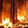 К тушению лесных пожаров в Сибири подключится Минобороны