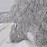 Автобус с детьми из-за снегопада перевернулся в Приморье