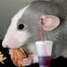 Американские ученые нашли в мозге «выключатель чувства голода»