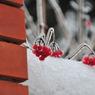 "Жителей ЦФО ожидает ""щадящая"" зима, прогнозируют метеорологи"