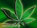 Аптеки Уругвая боятся продавать легализованную марихуану