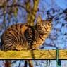 Самый старый кот на Земле пропал