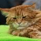 Виталий Милонов: Нельзя на котов вешать всех собак
