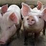 Владельцы подсобных хозяйств будут обязаны подавать сведения о себе в Минсельхоз