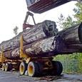Восемь человек погибли при столкновении автобуса с лесовозом в Марий Эл