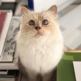 Еще и кошки: в Ухане у четвероногих любимцев обнаружен Covid-19