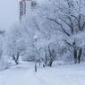 Пациент якутского интерната для инвалидов погиб, замерзнув у закрытого входа в здание