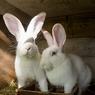 Трогательные новости зоопарка: на свете стало двумя зайчишками больше!