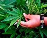 Демонстрация за легализацию марихуаны прошла в Праге