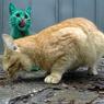 Скончался двухголовый кот- долгожитель (ВИДЕО)