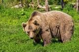 В Пензенской области медведь растерзал мужчину