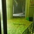 """Опубликовала запись с """"неславянским"""" подозреваемым во взрыве в Санкт-Петербурге"""