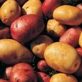 Американские диетологи рассказали, как любовь к картошке сказывается на фигуре