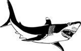 Австралиец заснял акулу, мирно плавающую рядом с серфингистами