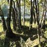 Леса в Подмосковье вырубают из-за жука-короеда – облкомитет лесного хозяйства
