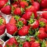 Чудо-ягода: учёные обнаружили в клубнике удивительные свойства